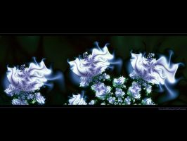 fractalBluewhiteRoses by love1008