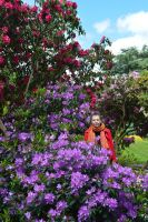The Heathfield Main Lawn Rhododendron Island Bed by aegiandyad
