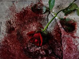 bleeding rose by eyeverdesign