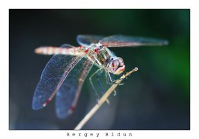 Dragonfly 2 by sergey1984