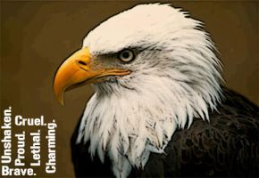 The Eagle. by luba4ko