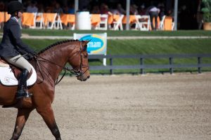 2012 Thermal Desert HITS Show Jumping by ThePerfectEquestrian