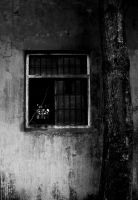 the broken window by dukeofspade