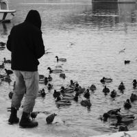 Prague - OnTheStreets - FeedingTheDucks by FlyingStarz