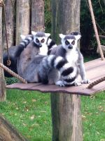 family of King Julien by Er0tism
