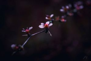 A Flowers Thorns (Day 73) by Jorgipie