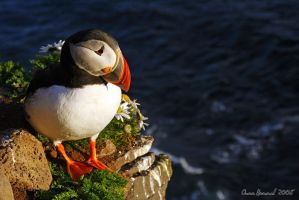 Puffin III - Portrait by Yinxy
