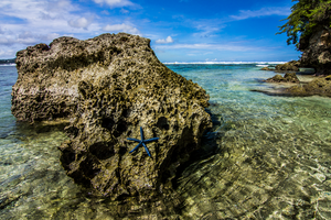 Starfish Paradise by TimGrey