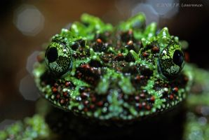 Mossy Eyes by MonarchzMan