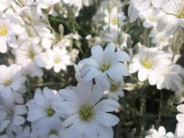 WHITE FLOWERS by evalunaofficial