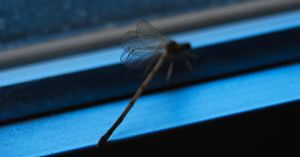 dragonfly - Ischnura - Wings. by montex