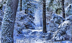 Winter Forest by montag451