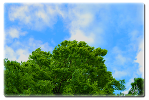 GreenTree and BlueSky by xeloader
