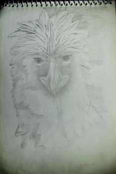Philippine Eagle by ryon-art