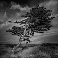 Wind And Wuthering II by Pixydream