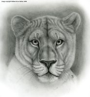 Lioness-Animal Symbolism by Art-of-Sekhmet