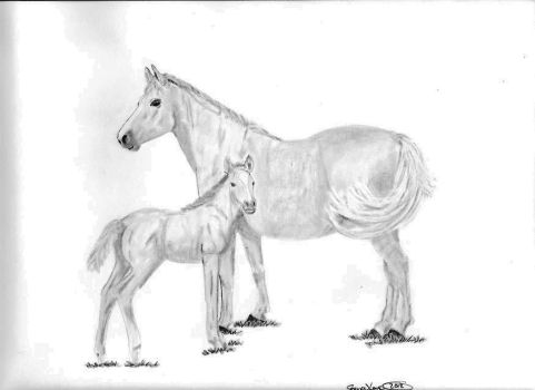 Mare and Foal by love0408