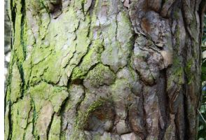 Tree Bark 108_quaddles by quaddles