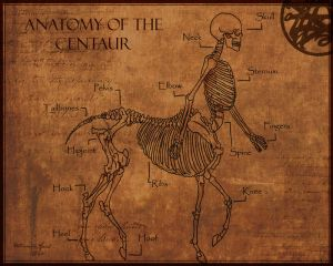 Anatomy of The Centaur