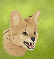Day 4: Serval by WolvenBird