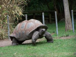 Tortoise1-Stock by SilkenWebs
