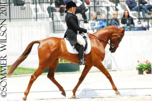 Collen Rutledge Dressage by zeeplease