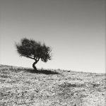 Shade Tree by vamosver