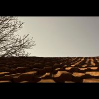 roof by izzy68