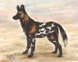 African Wild Dog by Shel-chan