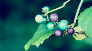 Green And Purple Pebbles Two by atLevel1Alt