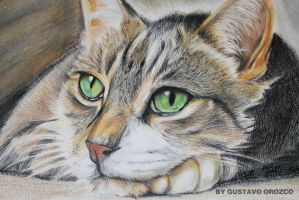 Prismacolor cat (colored pencils) by Guzumak
