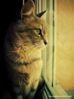 Cat looks through the window by Arunaudo