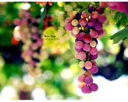 ... Grapes ... by RrainDrop