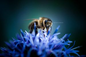 Bee by DREAMCA7CHER