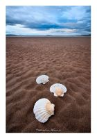 Shell by SebastianKraus