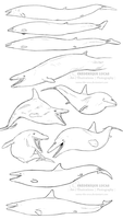 Ancient whales (Basilosaurus and Dorudon) by namu-the-orca