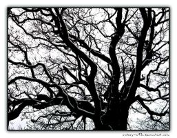 Winter tree by victory-a13