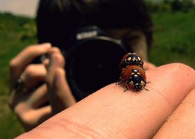 ladybugs gone wild by JordanRobin