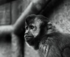 Monkey watching by fae-photography