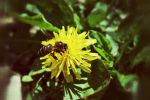 Bee by Coolnamesarebooked
