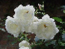 WHITE ROSES Mosaic by Dawnsuzanne
