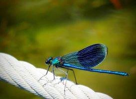 Metallic Blue by anneclaires
