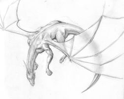 Dragon in mid-flight by halcyondf