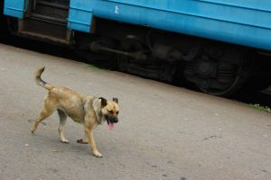 A dog who went by rail by hafele