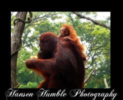 Mother and Child by Humble-Photography