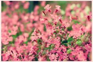 pink... by SG1000