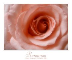 Rose Portrait - Romanza by nicoleP