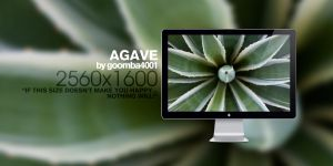 Agave by Goomba4001