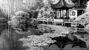 Infrared Chinese Garden by La-Vita-a-Bella
