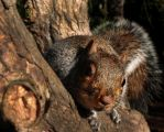 The squirrel in the wood VII by AlexB-Photography